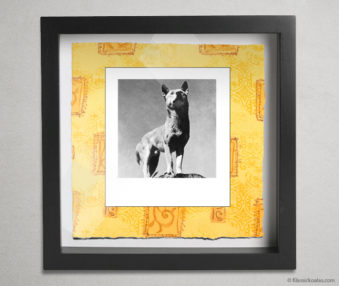 Koala Party Shadow Box 10-by-10 Inches 13