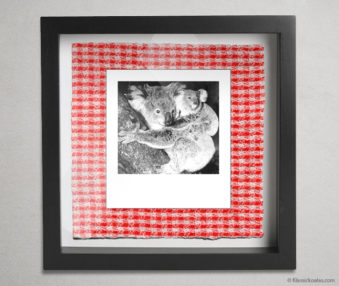 Koala Party Shadow Box 10-by-10 Inches 15