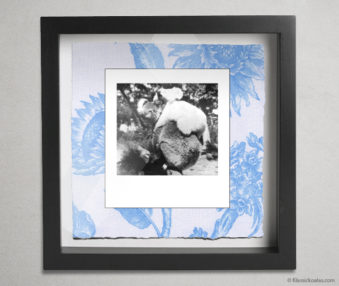 Koala Party Shadow Box 10-by-10 Inches 16