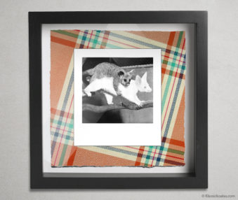 Koala Party Shadow Box 10-by-10 Inches 17