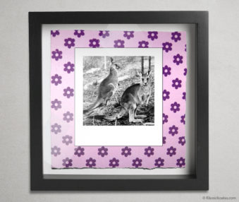 Koala Party Shadow Box 10-by-10 Inches 18