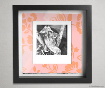 Koala Party Shadow Box 10-by-10 Inches 2