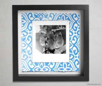 Koala Party Shadow Box 10-by-10 Inches 20
