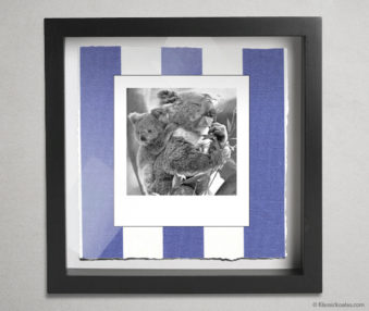 Koala Party Shadow Box 10-by-10 Inches 27