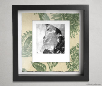 Koala Party Shadow Box 10-by-10 Inches 3