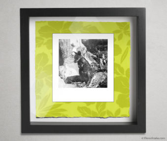 Koala Party Shadow Box 10-by-10 Inches 30