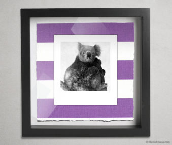 Koala Party Shadow Box 10-by-10 Inches 35