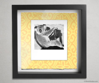 Koala Party Shadow Box 10-by-10 Inches 36