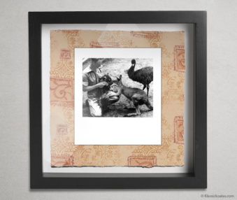 Koala Party Shadow Box 10-by-10 Inches 38