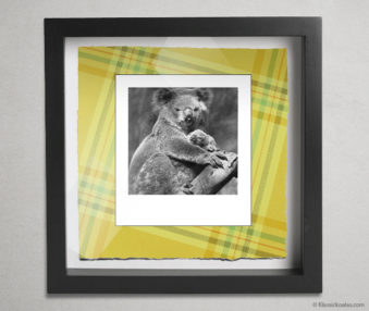 Koala Party Shadow Box 10-by-10 Inches 39