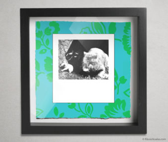 Koala Party Shadow Box 10-by-10 Inches 4