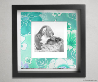 Koala Party Shadow Box 10-by-10 Inches 42
