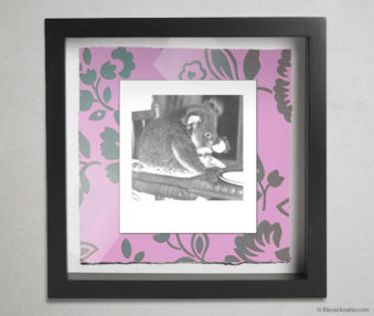 Koala Party Shadow Box 10-by-10 Inches 43