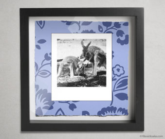 Koala Party Shadow Box 10-by-10 Inches 7