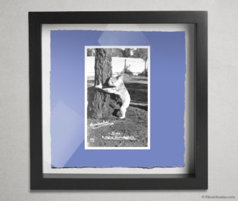 Koala Postcards Shadow Box 10-by-10 Inches 10