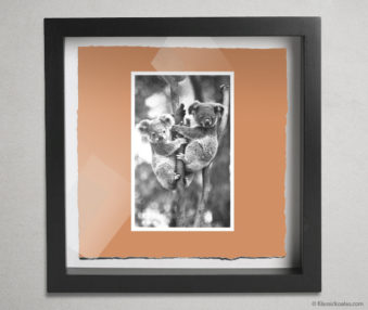Koala Postcards Shadow Box 10-by-10 Inches 13