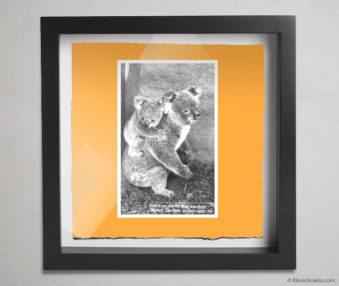 Koala Postcards Shadow Box 10-by-10 Inches 16