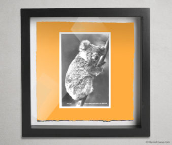 Koala Postcards Shadow Box 10-by-10 Inches 18
