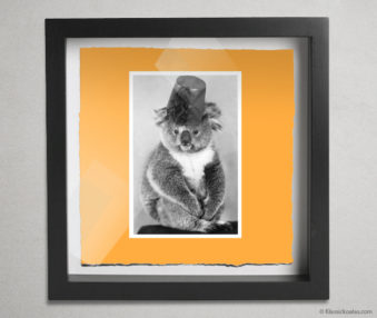 Koala Postcards Shadow Box 10-by-10 Inches 2