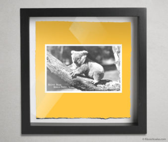 Koala Postcards Shadow Box 10-by-10 Inches 20