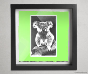 Koala Postcards Shadow Box 10-by-10 Inches 22