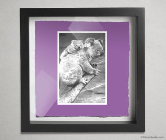 Koala Postcards Shadow Box 10-by-10 Inches 23