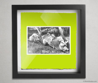 Koala Postcards Shadow Box 10-by-10 Inches 25