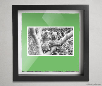 Koala Postcards Shadow Box 10-by-10 Inches 27