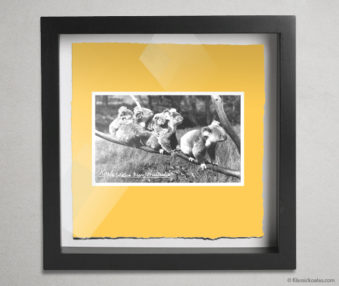 Koala Postcards Shadow Box 10-by-10 Inches 29