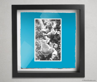 Koala Postcards Shadow Box 10-by-10 Inches 30