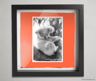 Koala Postcards Shadow Box 10-by-10 Inches 34