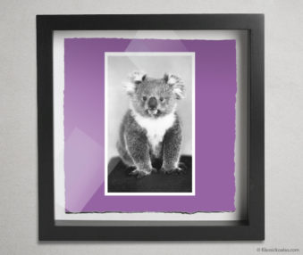 Koala Postcards Shadow Box 10-by-10 Inches 38