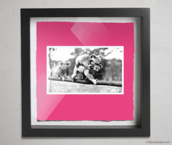 Koala Postcards Shadow Box 10-by-10 Inches 42