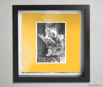 Koala Postcards Shadow Box 10-by-10 Inches 44