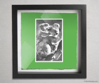 Koala Postcards Shadow Box 10-by-10 Inches 45