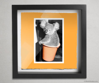 Koala Stars Shadow Box 10-by-10 Inches 2