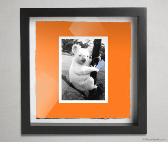 Koala Stars Shadow Box 10-by-10 Inches 28