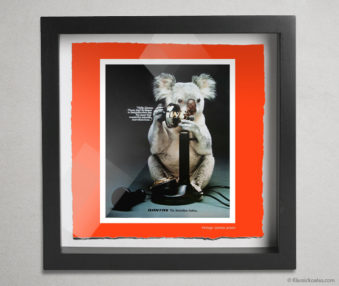 Koala Stars Shadow Box 10-by-10 Inches 3