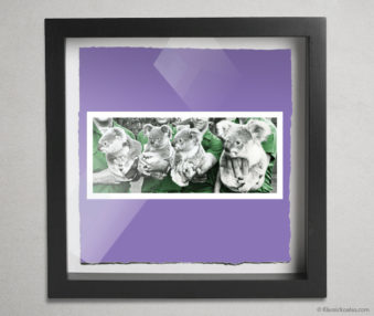 Koala Stars Shadow Box 10-by-10 Inches 32