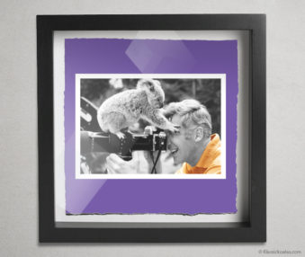 Koala Stars Shadow Box 10-by-10 Inches 37