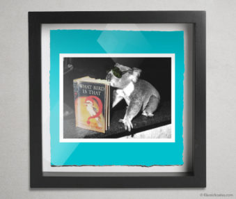 Koala Stars Shadow Box 10-by-10 Inches 8