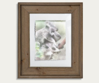 Koala Watercolor Painting 11-by-14 Barnwood Frame V 20