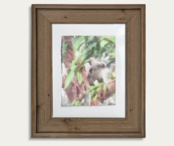 Koala Watercolor Painting 11-by-14 Barnwood Frame V 22