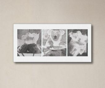 News Koalas 10-by-20 Inch Canvas Print 11