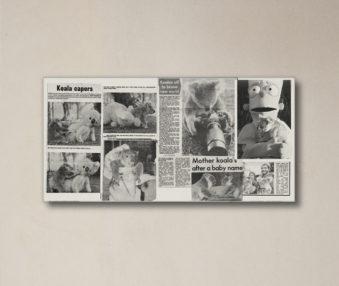News Koalas 10-by-20 Inch Canvas Print 2