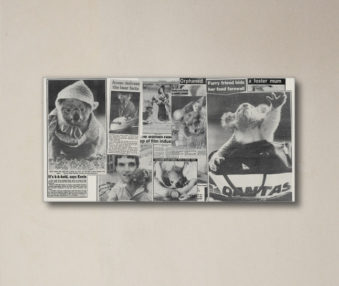 News Koalas 10-by-20 Inch Canvas Print 4