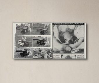 News Koalas 10-by-20 Inch Canvas Print 5
