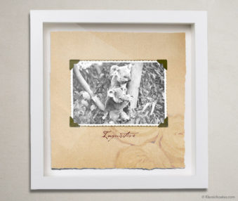 Valentine Koalas Shadow Box 10-by-10 Inches 10