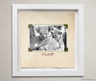 Valentine Koalas Shadow Box 10-by-10 Inches 11