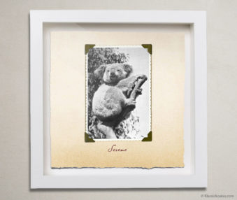 Valentine Koalas Shadow Box 10-by-10 Inches 15